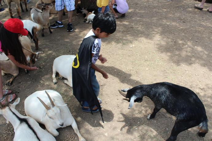 This black goat wasn't happy to meet Rishab